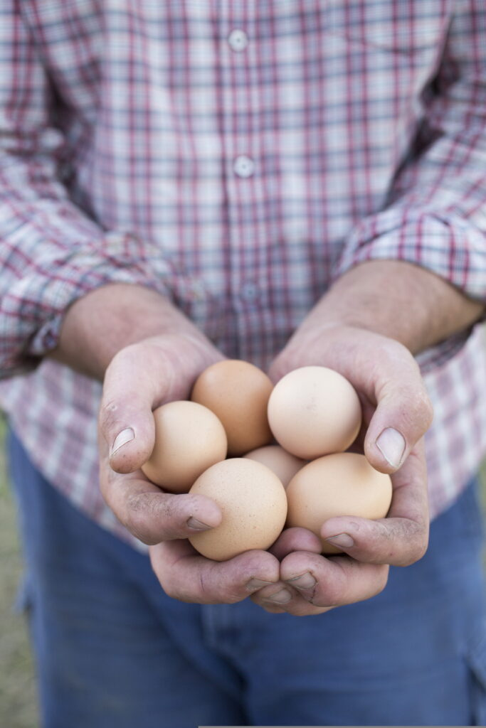 little hill farm eggs image
